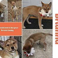 Adopt A Pet :: Brianna - Clear Lake, IA