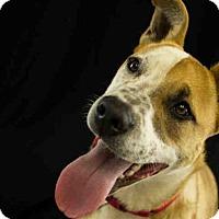 Adopt A Pet :: HARLEY - McKinleyville, CA