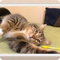 Adopt A Pet :: Rudy - Duluth, GA