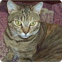 Adopt A Pet :: Amanda - Naples, FL