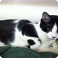 Adopt A Pet :: Deedle - Riverhead, NY