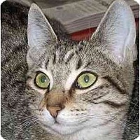 Adopt A Pet :: Ramona (video) - Portland, OR