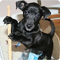 Adopt A Pet :: Mikey - Westfield, IN
