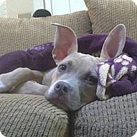 Adopt A Pet :: Eva - Auburn, CA