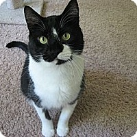 Adopt A Pet :: Monty *Foster/Forever Home* - Eagan, MN