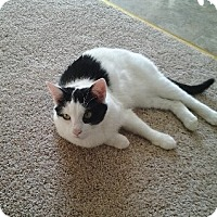 Adopt A Pet :: Betsy - Strongsville, OH