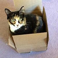 Adopt A Pet :: Mandie - Melbourne, FL