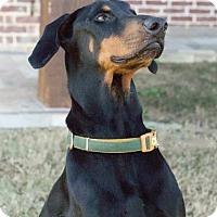 Adopt A Pet :: Sammy - Fort Worth, TX