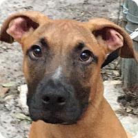 Adopt A Pet :: Falcon - Orlando, FL