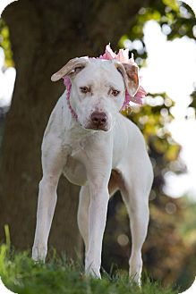 Terrier (Unknown Type, Medium) Mix Dog for adoption in Flint, Michigan - Buttercup - Adopted