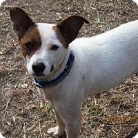 Adopt A Pet :: SASSIE - Lincolndale, NY