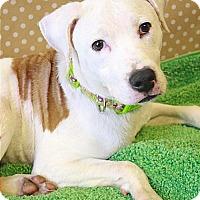 Adopt A Pet :: Juno - Cincinnati, OH