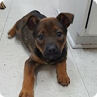 Adopt A Pet :: Nugget - GREENLAWN, NY