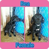 Adopt A Pet :: Bea meet me 5/5 - Manchester, CT