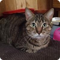 Adopt A Pet :: Macey - Witter, AR