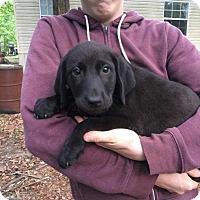 Adopt A Pet :: BM4 - Hanover, PA
