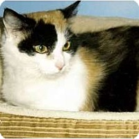 Adopt A Pet :: Rosie - Medway, MA