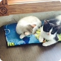 Adopt A Pet :: Penelope - Byron Center, MI