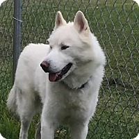 Adopt A Pet :: River - Courtesy Post - Toledo, OH