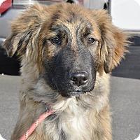 Adopt A Pet :: Wallace - Meridian, ID