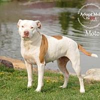 Adopt A Pet :: Moto - Topeka, KS