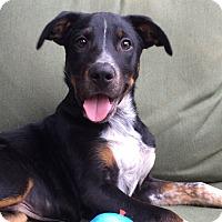 Adopt A Pet :: Rooter - Greensboro, GA