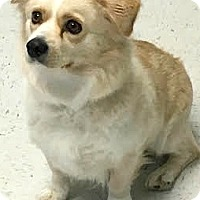 Adopt A Pet :: Tweety-ADOPTION PENDING - Boulder, CO