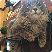 Adopt A Pet :: Sully (Genetic Blindness) - Valley City, ND