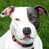 Adopt A Pet :: Remmy - Huntley, IL
