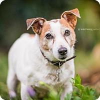 Adopt A Pet :: Charlie - El Cajon, CA