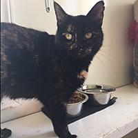 Adopt A Pet :: Primrose - Ashland, OH