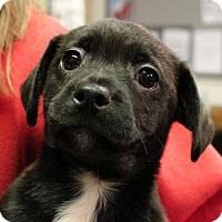 Adopt A Pet :: Morie - Waco, TX