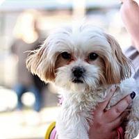 Adopt A Pet :: Ellie - Morganville, NJ