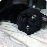 Adopt A Pet :: Toshiba (Manhattan) - New York, NY
