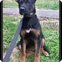 Adopt A Pet :: Shooley - Staunton, VA