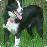 Adopt A Pet :: Jones--ADOPTED!!! - Tiffin, OH