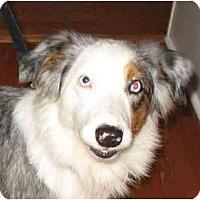 Adopt A Pet :: Timber - Orlando, FL