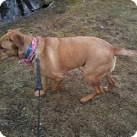 Adopt A Pet :: Annie - Marlton, NJ