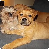 Adopt A Pet :: Bodhi - Apex, NC