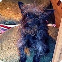 Adopt A Pet :: Molly - Salem, OR