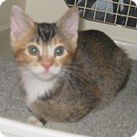 Adopt A Pet :: Puma - Dallas, TX