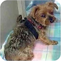 Adopt A Pet :: Megan Lee - Jacksonville, FL