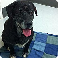 Adopt A Pet :: Faith - Courtesy Posting - New Canaan, CT