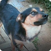 Adopt A Pet :: Blackie - Hilham, TN