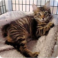 Adopt A Pet :: Camden & Clarence - Deerfield Beach, FL