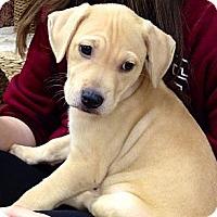 Adopt A Pet :: Lou Lou - Silsbee, TX