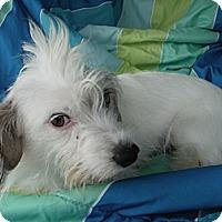 Adopt A Pet :: MISTY - Atascadero, CA