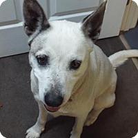 Adopt A Pet :: Sunrise - Murphy, NC