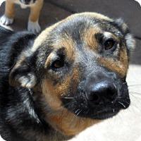 Adopt A Pet :: Shasta - Oakley, CA