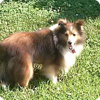 Adopt A Pet :: Jackie - Abingdon, MD